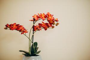 Keystone Dentistry Florals